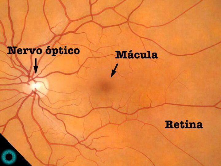 Ilustração representativa de uma retina normal.