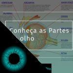 Conheça as partes do olho